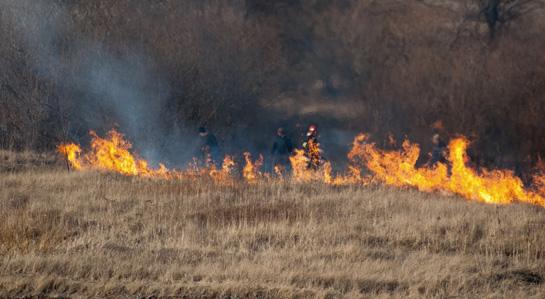 grafika- pożar traw