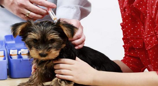 grafika- akcja szczepienie psów