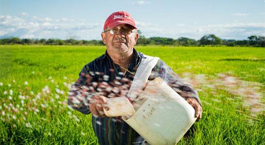 Na zdjęciu rolnik sięjący nawóz