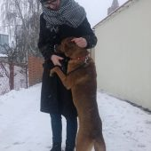 Brązowy pies