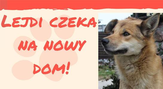 Plakat promujący adopcję psa.